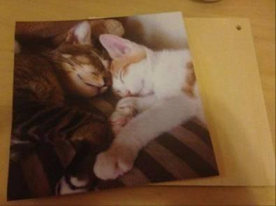 hong kong diy photo transfer gift cat art wood 香港 相片 轉移 禮物 木 藝術