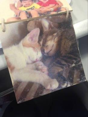 hong kong diy photo transfer gift cat art wood 香港 相片 轉移 禮物 木 藝術
