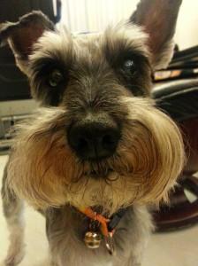 dog pet responsible owner 狗 寵物 香港